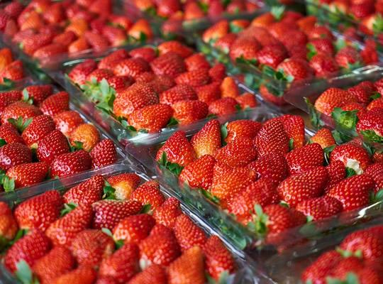 strawberry-2289500_960_720 (1).jpg