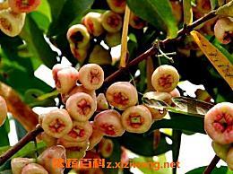 葡桃的营养价值和功效