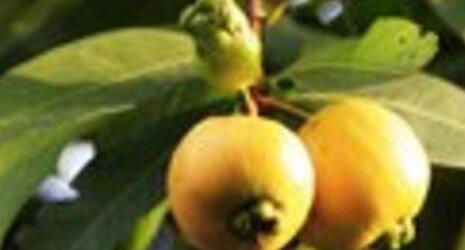 葡桃的营养价值与功效