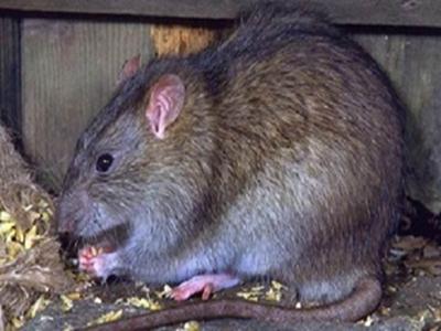 二氧化碳灭鼠管用吗