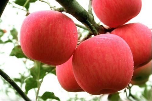 宝宝腹泻能不能吃苹果