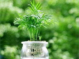 水培植物的越冬技巧:光照适宜,清洁增温