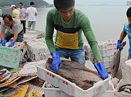 厄瓜多尔进口冷冻鲳鱼检出新冠阳性