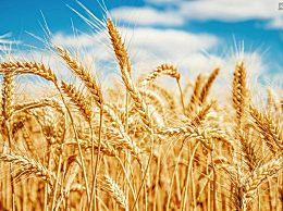 小麦一斤多少钱