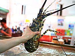 中国暂停进口澳龙虾