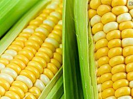 近期玉米的价格如何