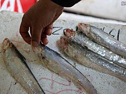 长江刀鱼多少钱一斤