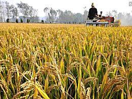 2020年粮补每亩多少钱?