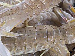 怎么挑选濑尿虾