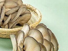 蘑菇怎样储存不长虫子