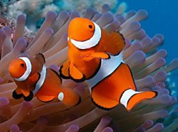 海里常见的鱼