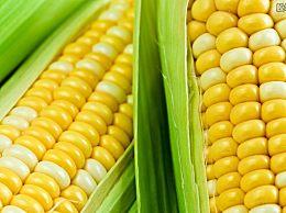 现在玉米多少钱一斤