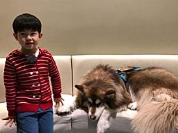 安吉与王思聪爱犬合影互动 狗生赢家王可可为流浪狗找家园