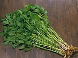 水芹菜的营养价值:富含铁元素是缺铁性贫血患者的佳