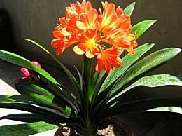 室内放什么植物最好:综合考虑健康、安全、风水因素