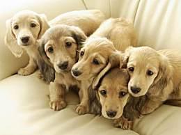 狗狗常见的消化道寄生虫有哪些 狗狗的驱虫策略