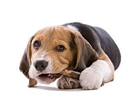 狗狗的这些行为是什么意思 狗狗的常见行为解读