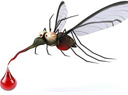 高层蚊子多怎么解决