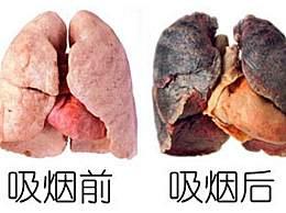 立秋后吃什么养肺?每天多吃这些食物,润肺养喉!