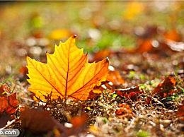 秋季10大养生常识