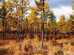 国内最美的十大原始森林 中国十大最美森林盘点