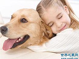"""什么是最适合家庭使用的大型犬?""""温暖的男人""""金色的头发绝对是最好的伴侣"""