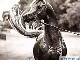 """世界上最昂贵的马 它们被称为""""活的艺术品"""""""