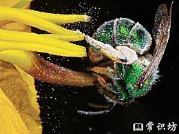 自然界十大蛰虫十大名单