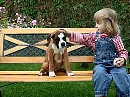 你知道世界上有多少只著名的狗