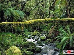 非洲最著名的盆地:世界第一大盆地刚果盆地(资源丰富)