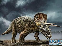 地球上最强壮的食草恐龙――三角龙(霸王龙也需要撤退)
