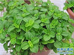 世界上最奇怪的植物 毒草 能吸收室内甲醛