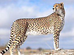 世界十大禁猫不能碰这些野兽