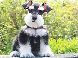十大最方便和最容易饲养的小狗