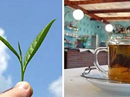 世界十大茶叶出口国斯里兰卡排名第一 中国排名第二