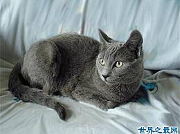 五个受欢迎的宠物猫品种霍思燕饲养的加拿大无毛猫变得受欢迎