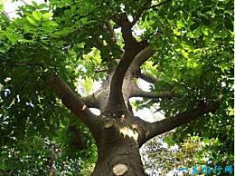 世界上最毒的树 箭毒 可以被称为死亡之树