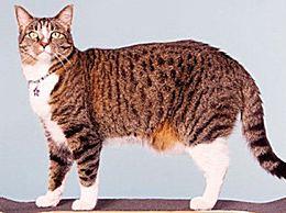《吉尼斯世界纪录大全》选了技能最多的猫滴滴加