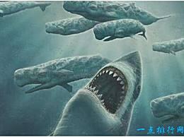 历史上最大的鲨鱼 巨齿鲨大约19米长 可以捕食鲸鱼