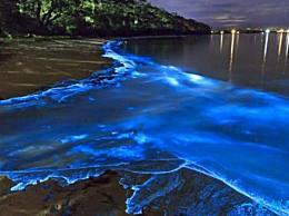 世界十大最美丽的自然现象 荧光海滩太美了