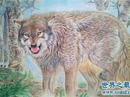 最大的犬科动物是哪种动物?海德尼上的狗身高超过一米