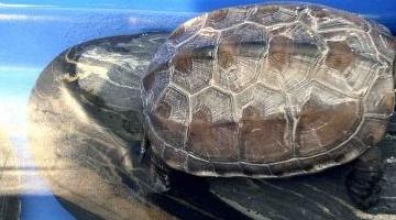 哪个乌龟对初学者更好?十大最有价值的海龟