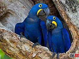 世界上价值最高的十大鸟类都是非常人性化的 羽毛华丽而耀眼