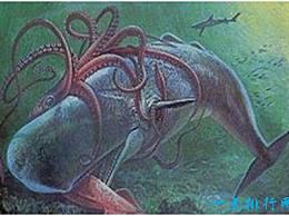 世界上最大的鱿鱼 国王鱿鱼可以长到20米长