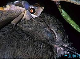 十大最奇怪的动物 第一种动物喜欢吃各种动物粪便