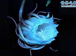 世界上最美丽的花 盘点十大最美丽的花
