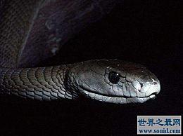 世界上最快的蛇 它的速度可以达到每小时20公里