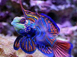 七彩十大水生动物 七彩青蛙最美