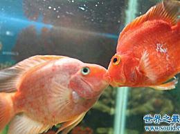 热带鱼有哪些种类?各种美丽的水下公主