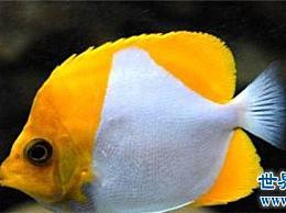 榜单上十大最美丽的热带鱼、小丑鱼和仙鱼
